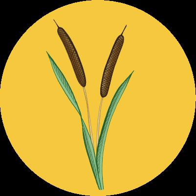 Voedselfamilie Krimpenerwaard lokalevoedselvoorziening food agrarischondernemen natteteelten duurzaam voedselpioniers